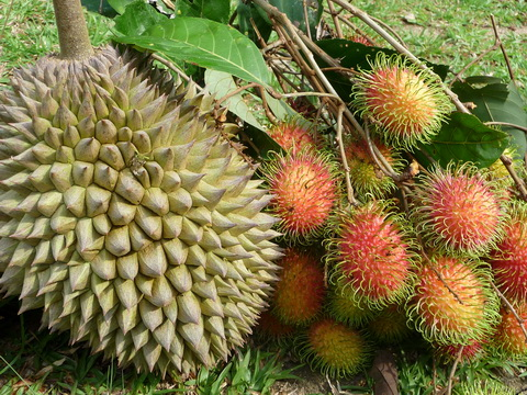 durian_rambutan